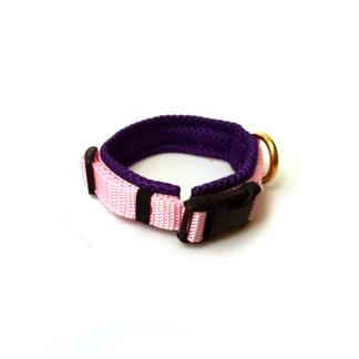 Halsbänder für kleine Hunde